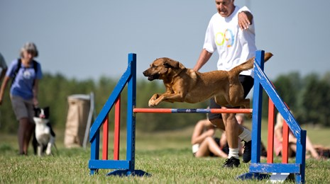 Agility_hund_hop over forhindring